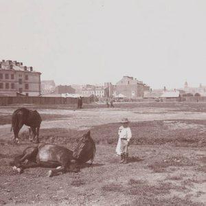 Konie na Powiślu,1892, autorstwa Konrada Brandela